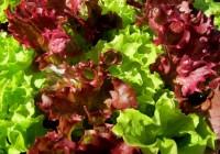 Mit effektiven Mikroorganismen zum Traumgarten